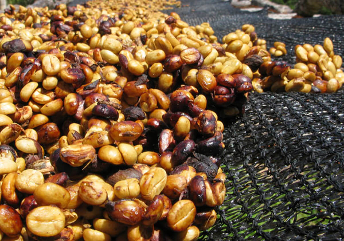 Honey kavos apdorojimo būdas